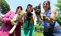 HAYVAN HAKLARı FEDERASYONU - Sokak Kedileri Ve Köpekleri Yeni Yuvaya Kavuşuyor