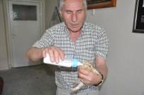 ALI HAYDAR - Yavru Yaban Tavşanlarını Biberonla Besliyor