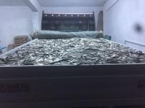 İNCİ KEFALİ - Van'da 4 Ton Kaçak Avlanmış Balık Ele Geçirildi