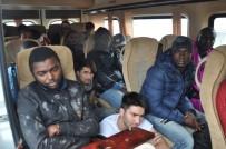 ZEYTINLIK - Çanakkale'de 51 Kaçak Göçmen Yakalandı