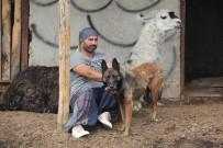 MUHABBET KUŞU - Ankara'da Hasta Hayvanlardan Oluşan Farklı Bir Çiftlik