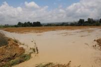 ZEYTİN AĞACI - Yağış Yüzlerce Dönüm Ekili Araziye Zarar Verdi