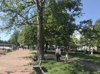 ÇEVRE VE ORMAN BAKANLıĞı - Alaplı'da Çınar Ağaçları Kurumaya Yüz Tutuyor