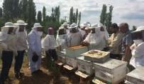 MUSTAFA KÖSEOĞLU - Bayramiç'te 'Uygulamalı Ana Arı Yetiştiriciliği' Kursu Düzenlendi