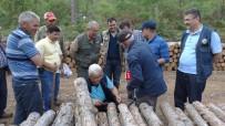 MUSTAFA AVCı - Çanakkale'de Çam Ağaçlarının Kuruma Nedenleri Araştırılıyor