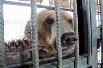 HAYVANAT BAHÇESİ - Hayvanat Bahçesine Ziyaretçi Akını