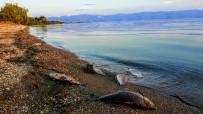 OKSIJEN - İznik Gölü'nde Korkutan Manzara