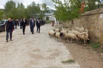 KREDİ DESTEĞİ - Köse'de Süt Koyuncularına ORKÖY Desteği
