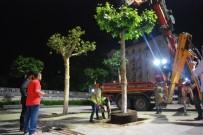 TAKSIM - Taksim Meydanında Ağaçlandırma Çalışmaları Sona Erdi