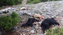 KEÇİ - Karaman'da Yıldırım Düşmesi Sonucu 15 Keçi Telef Oldu