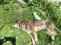 SOKAK KEDİSİ - Kastamonu'da 14 Köpek İle 18 Kedi, Zehirlenerek Öldürüldü