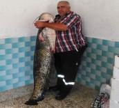 AMATÖR BALIKÇI - Boyu Kadar Balık Yakaladı