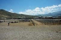 HAYVAN - Et Fiyatları Canlı Hayvan Pazarını Vurdu