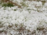 Kangal'da Buğday Tarlalarını Dolu Vurdu
