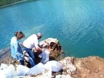 AMATÖR - Manavgat Oymapınar Barajına 50 Bin Yavru Sazan Balığı Salındı