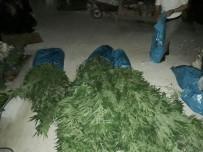 KARAKUYU - Milas'ta 2 Kilo Esrarla 36 Kök Hint Keneviri Ele Geçirildi