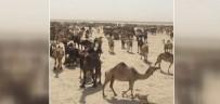 SINIR DIŞI - Suudi Arabistan, Katar Develerini Sınır Dışı Etti