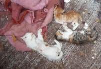 İTİRAF - Uşak'ta 17 Kedi Parçalanmış Halde Bulundu