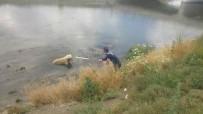 Kanala Düşen Köpeği İtfaiye Kurtardı