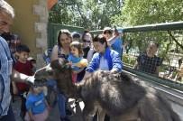 KEÇİ - Keçiören Evcil Hayvanlar Parkı Ziyaretçilerini Bekliyor