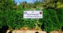 GÜMÜŞSU - Malatya'da 3 Bin 117 Kök Kenevir Bitkisi Ele Geçirildi