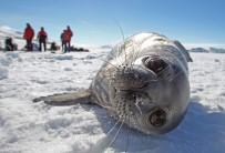 BALIK AĞI - Okyanuslardaki Kirlilikten Antarktika Kıyıları Da Nasibini Aldı