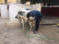 ÇOBAN KÖPEĞİ - Aksaray Malaklısı Cinsi Çoban Köpeğinin Banyo Keyfi