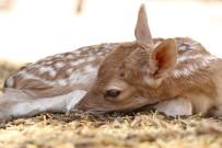 HAYVANAT BAHÇESİ - Doğurganlık Oranı En Yüksek Hayvanat Bahçesi