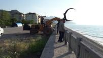OLTA - Kastamonu'da Sahile Şamandıra Vurdu