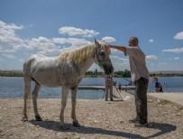 FIRAT NEHRİ - Nehirde hem kendileri hem atları serinledi