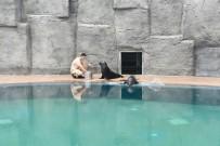 HAYVANAT BAHÇESİ - Bursa Hayvanat Bahçesi'nin Yeni Misafirleri İlgi Çekiyor