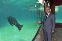 FRANKFURT - Bursa Zoo'nun Yeni Misafirleri Fok Ve Penguen
