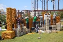 MURAT BOZ - Uluslararası Portakal Festivali Hazırlıkları Başladı