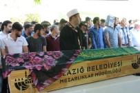 Mezarlık ziyaretinde arının soktuğu kadın öldü!