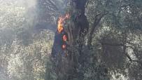 BALLıK - Sultanhisar'daki Yangının Sigaradan Çıktığı Belirtildi