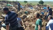 ÖZBURUN - Ağıl çöktü, 470 koyun telef oldu
