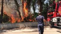 POLİS - Antalya'da 5 Dönümlük Orman Yandı