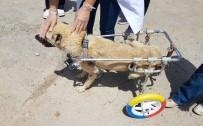 NAVIGASYON - Aracının Motoruna Sıkışan Kedi Hayatını Değiştirdi