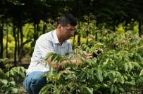 SONBAHAR - Bursa'da Orman Köylerine 30 Bin Ceviz Fidanı