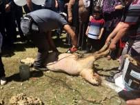 MURAT DURU - Develi'de Koyun Kırım Şenliği Düzenlendi