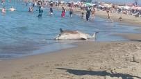 YUNUS BALIĞI - Ölü Yunus Balığı Karaya Vurdu