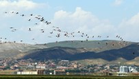 Avrupa'da Nesli Tükenme Noktasına Gelen Flamingoların Yeni Adresi Tuz Gölü