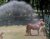 HAYVANAT BAHÇESİ - Bursa'da Sıcaktan Bunalan Hayvanlar Böyle Serinledi