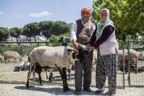 ZEYTİN YAĞI - Tarımda İzmir Yükselişi