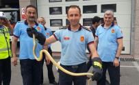 ANKARA İTFAİYESİ - Ankara İtfaiyesi 294 Hayvanı Kurtardı