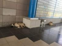 Başakşehir Belediyesi Sıcak Havalarda Sokak Hayvanlarını Unutmadı
