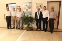 ZEYTİN AĞACI - Başkan Uysal Turizm Fakültesine Zeytin Ağacı Hediye Etti