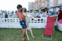 GÜNEŞLI - Dev Kangal Köpeğine Gözü Gibi Bakıyor