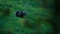 DAĞ KEÇİSİ - Türkiye'nin Doğal Hayatını Fotoğraflıyor