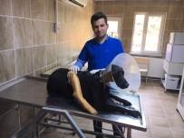 Yaralanan Sokak Köpeği Tedavi Edildi